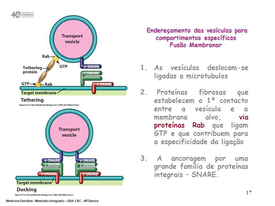 DEPARTAMENTO DE CIÊNCIAS DA SAÚDE Medicina Dentária - Mestrado Integrado – UBA 3 BC - MTBarros 17 Endereçamento das vesículas para compartimentos espe