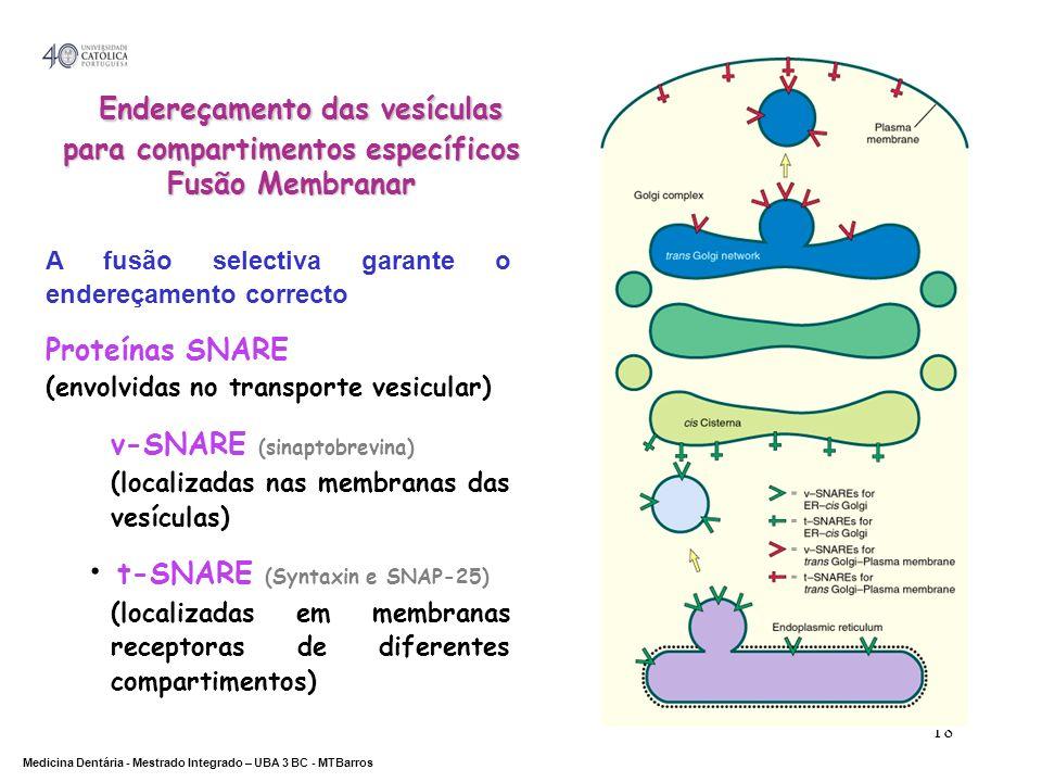 DEPARTAMENTO DE CIÊNCIAS DA SAÚDE Medicina Dentária - Mestrado Integrado – UBA 3 BC - MTBarros 18 Endereçamento das vesículas para compartimentos espe