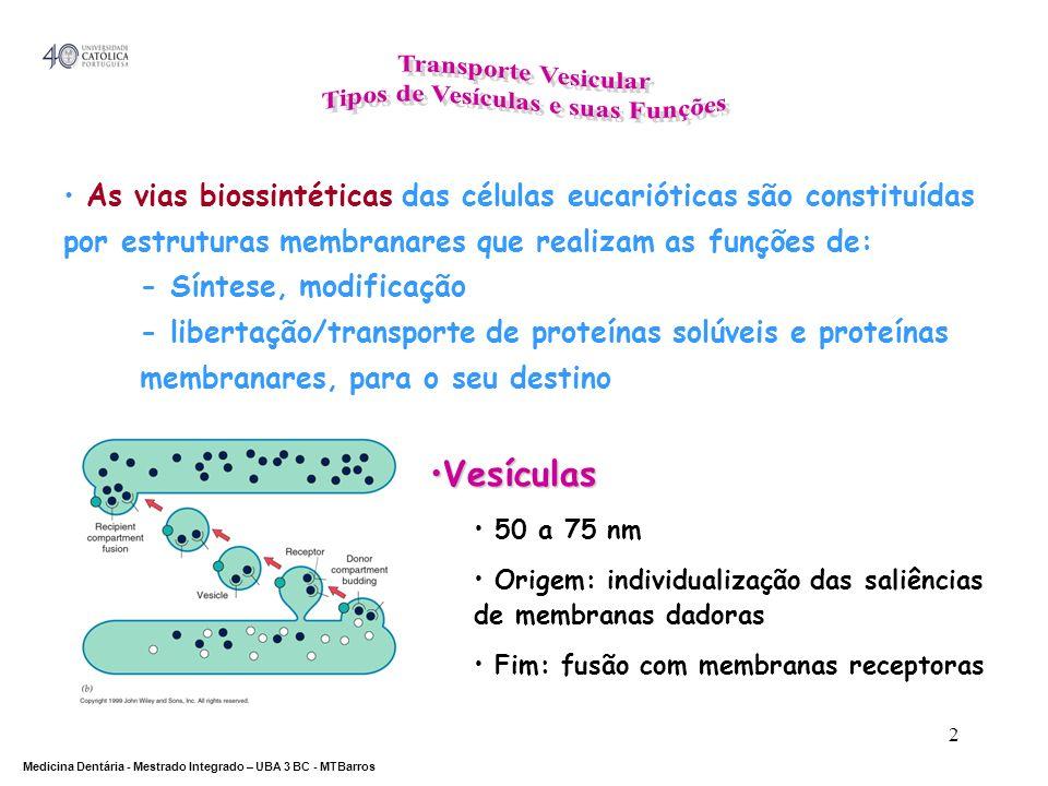 DEPARTAMENTO DE CIÊNCIAS DA SAÚDE Medicina Dentária - Mestrado Integrado – UBA 3 BC - MTBarros 2 As vias biossintéticas das células eucarióticas são c