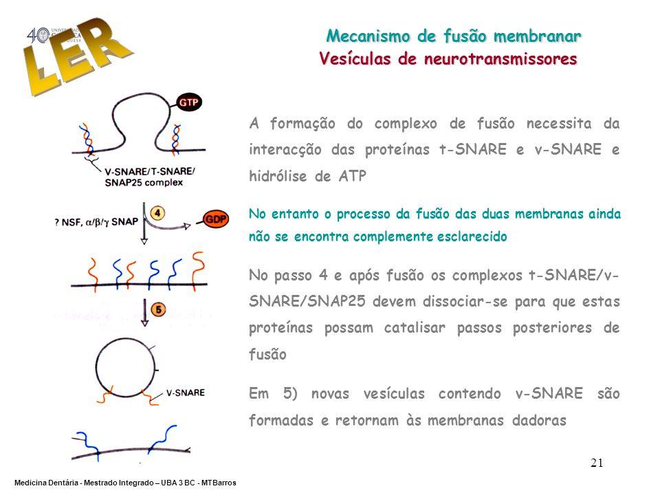 DEPARTAMENTO DE CIÊNCIAS DA SAÚDE Medicina Dentária - Mestrado Integrado – UBA 3 BC - MTBarros 21 A formação do complexo de fusão necessita da interac