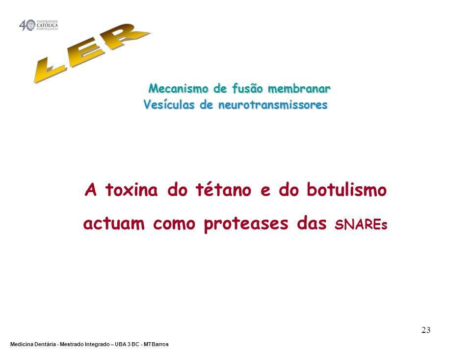 DEPARTAMENTO DE CIÊNCIAS DA SAÚDE Medicina Dentária - Mestrado Integrado – UBA 3 BC - MTBarros 23 A toxina do tétano e do botulismo actuam como protea