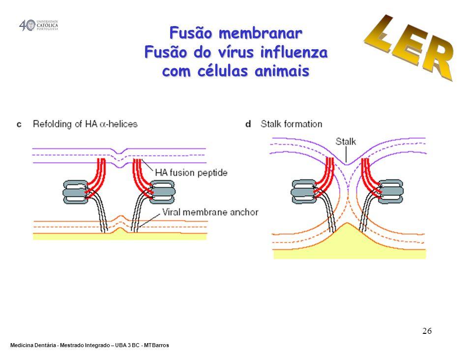 DEPARTAMENTO DE CIÊNCIAS DA SAÚDE Medicina Dentária - Mestrado Integrado – UBA 3 BC - MTBarros 26 Fusão membranar Fusão do vírus influenza com células