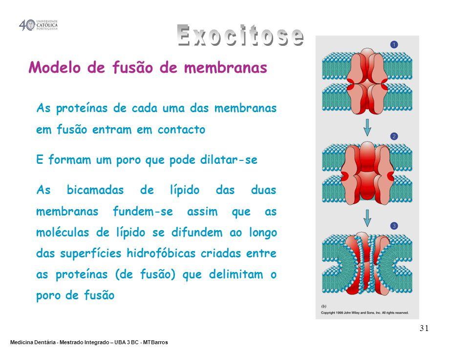 DEPARTAMENTO DE CIÊNCIAS DA SAÚDE Medicina Dentária - Mestrado Integrado – UBA 3 BC - MTBarros 31 Modelo de fusão de membranas As proteínas de cada um