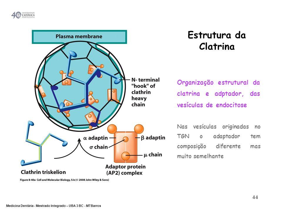 DEPARTAMENTO DE CIÊNCIAS DA SAÚDE Medicina Dentária - Mestrado Integrado – UBA 3 BC - MTBarros 44 Estrutura da Clatrina Organização estrutural da clat