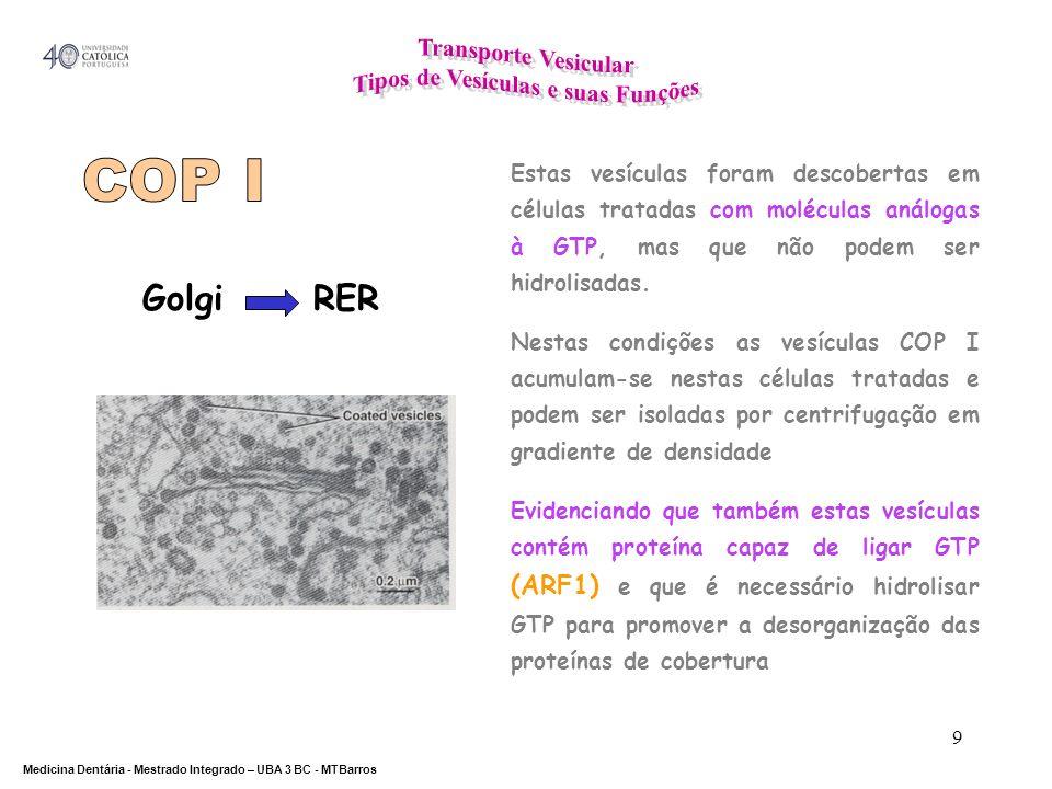 DEPARTAMENTO DE CIÊNCIAS DA SAÚDE Medicina Dentária - Mestrado Integrado – UBA 3 BC - MTBarros 9 Golgi RER Estas vesículas foram descobertas em célula