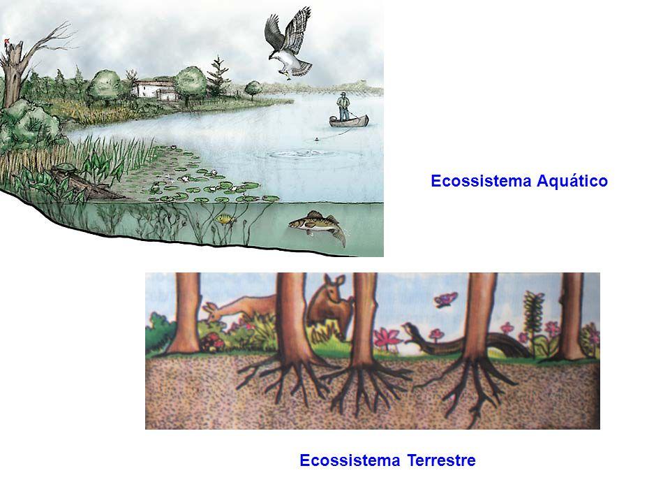 A Biosfera encontra-se organizada em Ecossistemas
