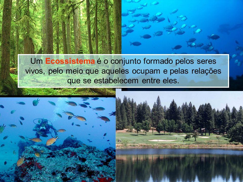 Ecossistema Aquático Ecossistema Terrestre