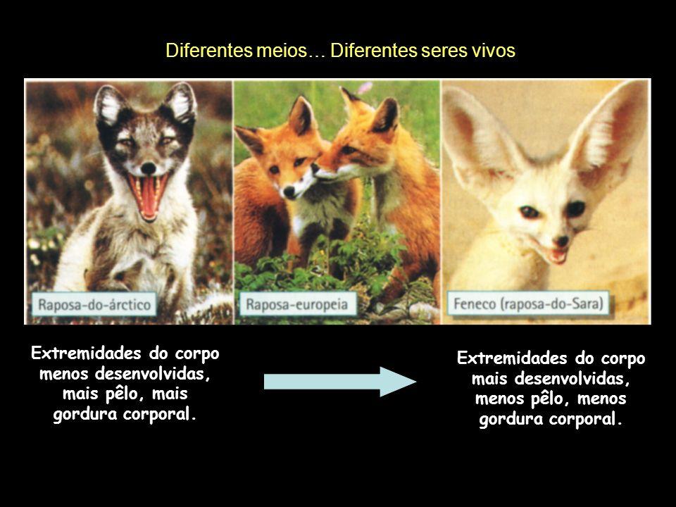 Um Ecossistema é o conjunto formado pelos seres vivos, pelo meio que aqueles ocupam e pelas relações que se estabelecem entre eles.