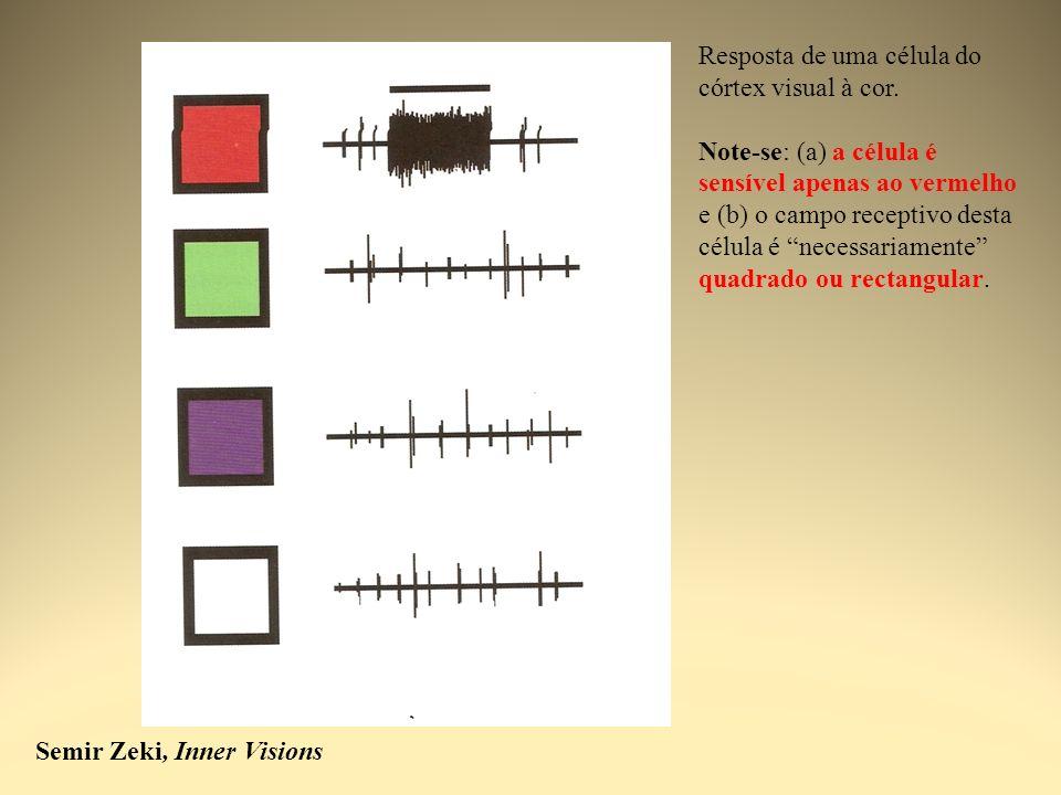 Semir Zeki, Inner Visions Resposta de uma célula do córtex visual à cor. Note-se: (a) a célula é sensível apenas ao vermelho e (b) o campo receptivo d