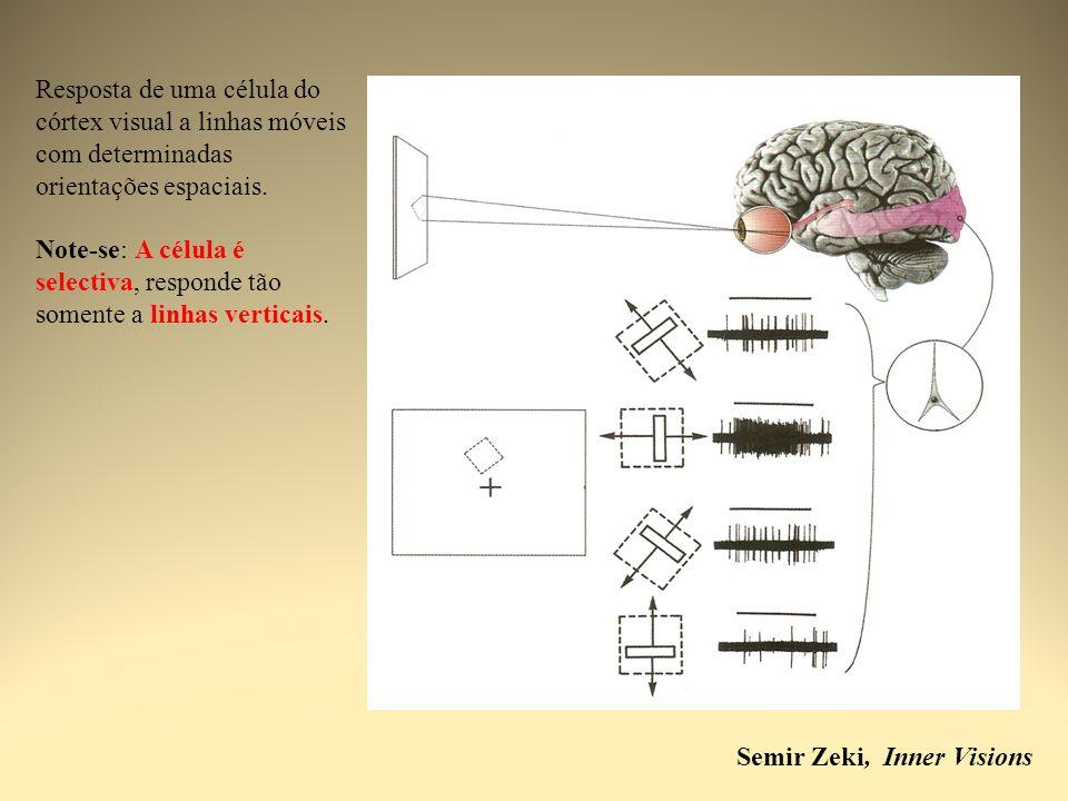 Semir Zeki, Inner Visions Resposta de uma célula do córtex visual a linhas móveis com determinadas orientações espaciais. Note-se: A célula é selectiv