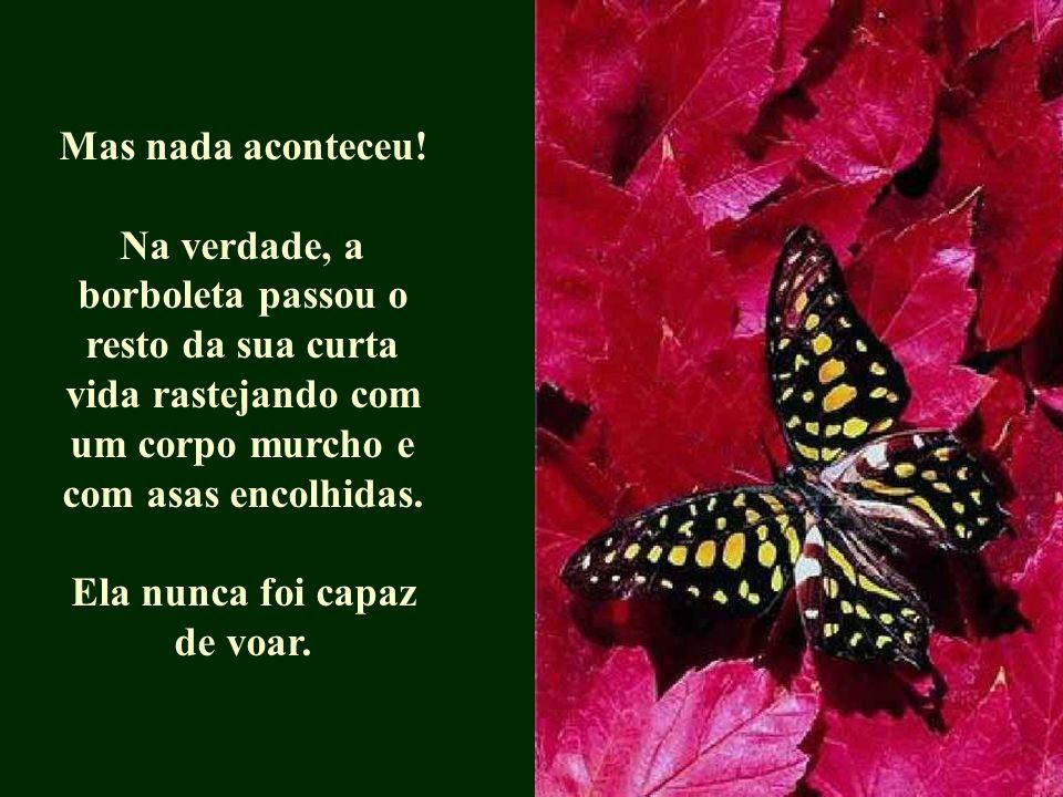 Mas nada aconteceu! Na verdade, a borboleta passou o resto da sua curta vida rastejando com um corpo murcho e com asas encolhidas. Ela nunca foi capaz