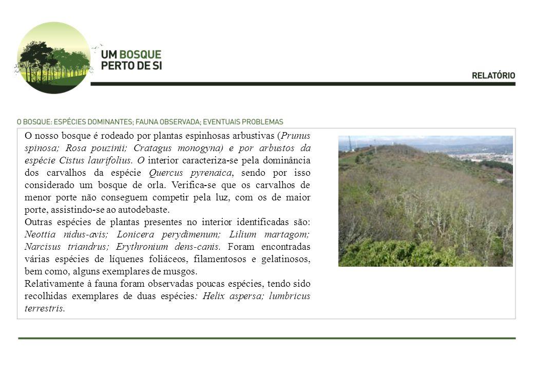 O nosso bosque é rodeado por plantas espinhosas arbustivas (Prunus spinosa; Rosa pouzinii; Cratagus monogyna) e por arbustos da espécie Cistus laurifo