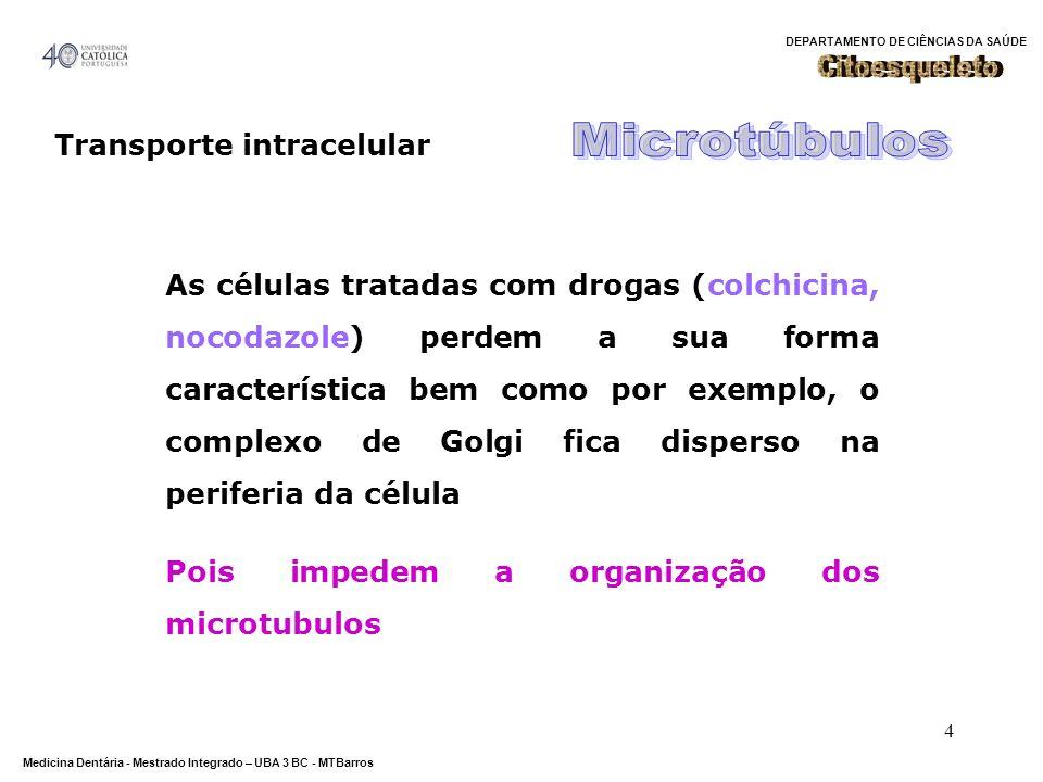 DEPARTAMENTO DE CIÊNCIAS DA SAÚDE Medicina Dentária - Mestrado Integrado – UBA 3 BC - MTBarros 35 Motores moleculares Proteínas motoras Movimento unidireccional através do citoesqueleto Movimento unidireccional através do citoesqueleto Alterações conformacionais (ciclo mecânico) Alterações conformacionais (ciclo mecânico) Tipos: cinesinas e dineínas (ao longo dos microtubulos) e miosinas (ao longo Tipos: cinesinas e dineínas (ao longo dos microtubulos) e miosinas (ao longo dos microfilamentos de actina) Carga (material a transportar): Carga (material a transportar): vesículas, mitocôndrias, lisossomas, cromossomas, filamentos do citoesqueleto
