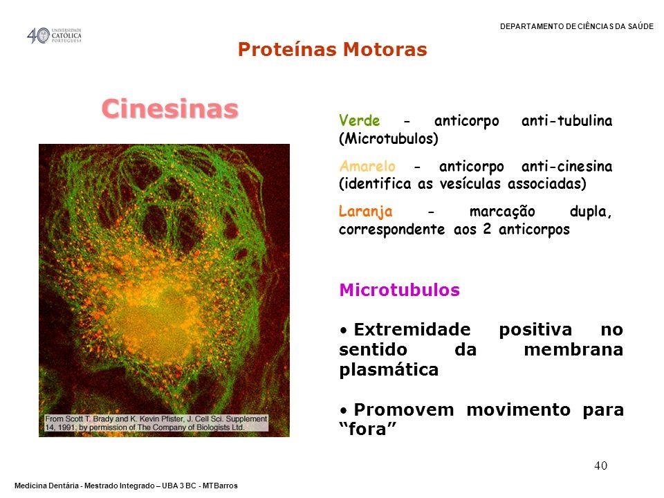 DEPARTAMENTO DE CIÊNCIAS DA SAÚDE Medicina Dentária - Mestrado Integrado – UBA 3 BC - MTBarros 40 Verde - anticorpo anti-tubulina (Microtubulos) Amare