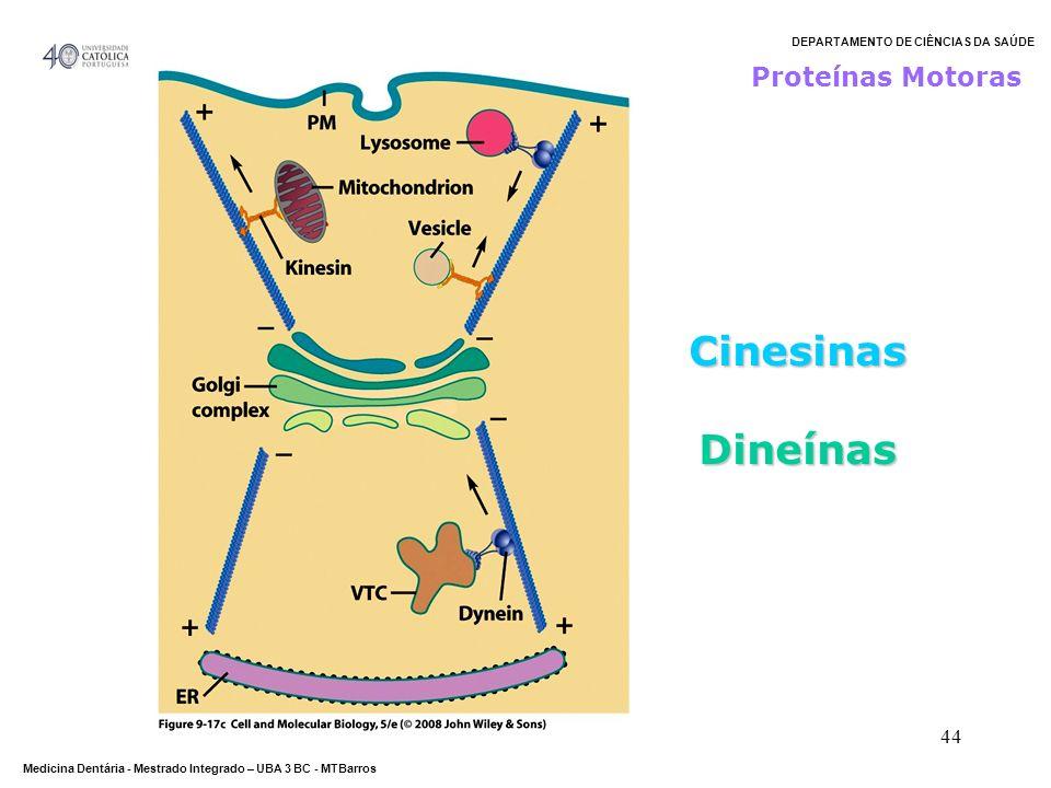 DEPARTAMENTO DE CIÊNCIAS DA SAÚDE Medicina Dentária - Mestrado Integrado – UBA 3 BC - MTBarros 44 Proteínas Motoras Cinesinas Dineínas Dineínas
