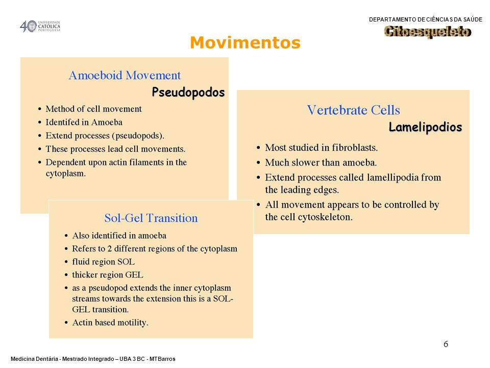 DEPARTAMENTO DE CIÊNCIAS DA SAÚDE Medicina Dentária - Mestrado Integrado – UBA 3 BC - MTBarros 6 Movimentos Pseudopodos Lamelipodios