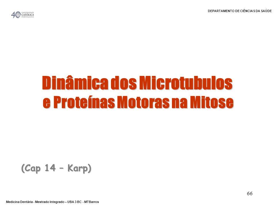 DEPARTAMENTO DE CIÊNCIAS DA SAÚDE Medicina Dentária - Mestrado Integrado – UBA 3 BC - MTBarros 66 (Cap 14 – Karp) Dinâmica dos Microtubulos e Proteína