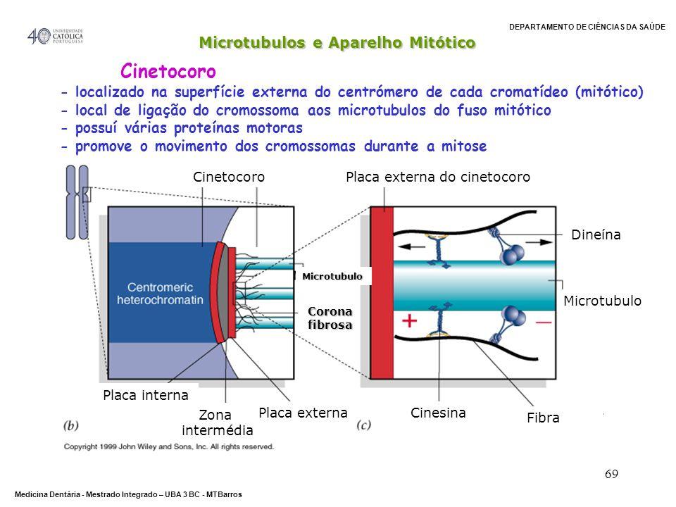 DEPARTAMENTO DE CIÊNCIAS DA SAÚDE Medicina Dentária - Mestrado Integrado – UBA 3 BC - MTBarros 69 CinetocoroPlaca externa do cinetocoro Cinesina Dineí