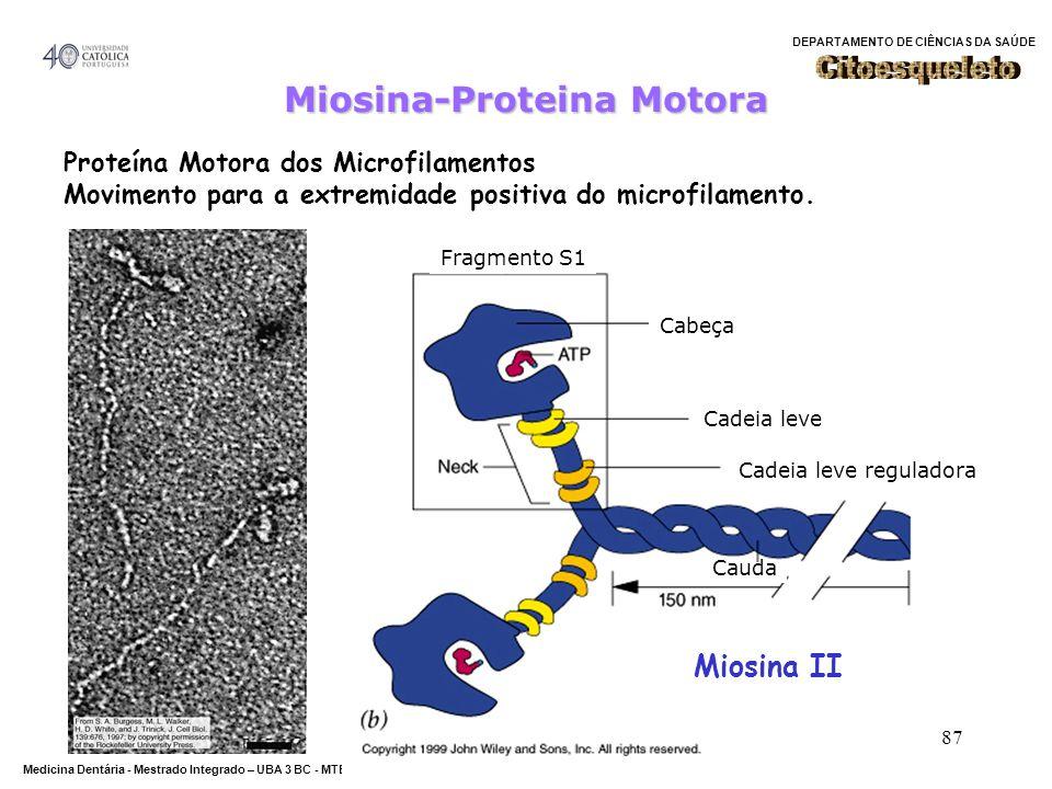 DEPARTAMENTO DE CIÊNCIAS DA SAÚDE Medicina Dentária - Mestrado Integrado – UBA 3 BC - MTBarros 87 Miosina-Proteina Motora Fragmento S1 Cadeia leve Cab