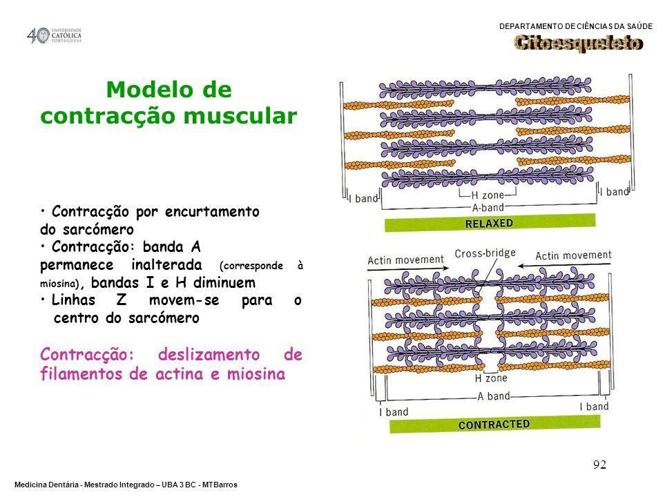 DEPARTAMENTO DE CIÊNCIAS DA SAÚDE Medicina Dentária - Mestrado Integrado – UBA 3 BC - MTBarros 92 Modelo de contracção muscular Contracção por encurta