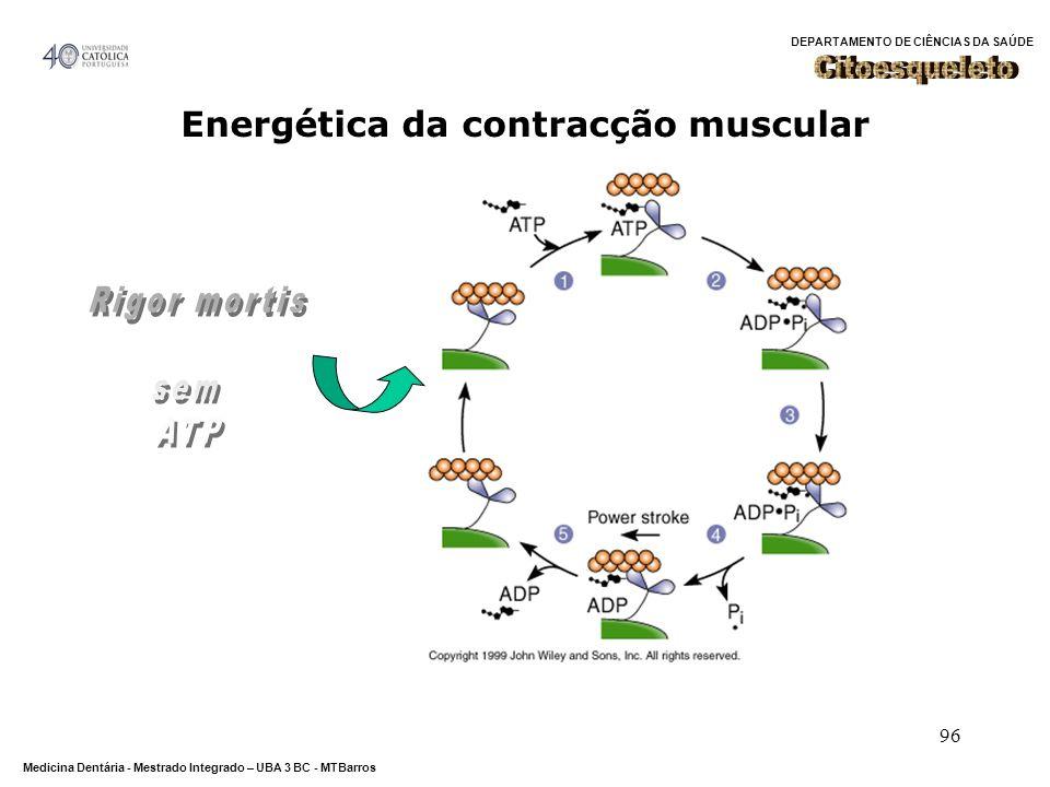 DEPARTAMENTO DE CIÊNCIAS DA SAÚDE Medicina Dentária - Mestrado Integrado – UBA 3 BC - MTBarros 96 Energética da contracção muscular