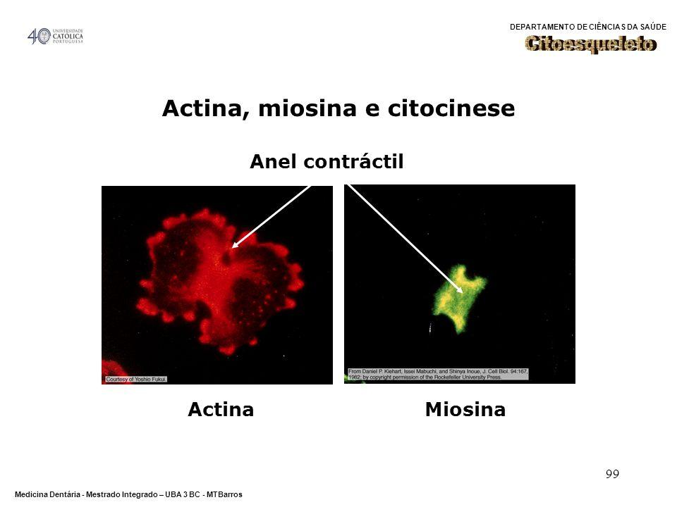 DEPARTAMENTO DE CIÊNCIAS DA SAÚDE Medicina Dentária - Mestrado Integrado – UBA 3 BC - MTBarros 99 Actina, miosina e citocinese Anel contráctil ActinaM
