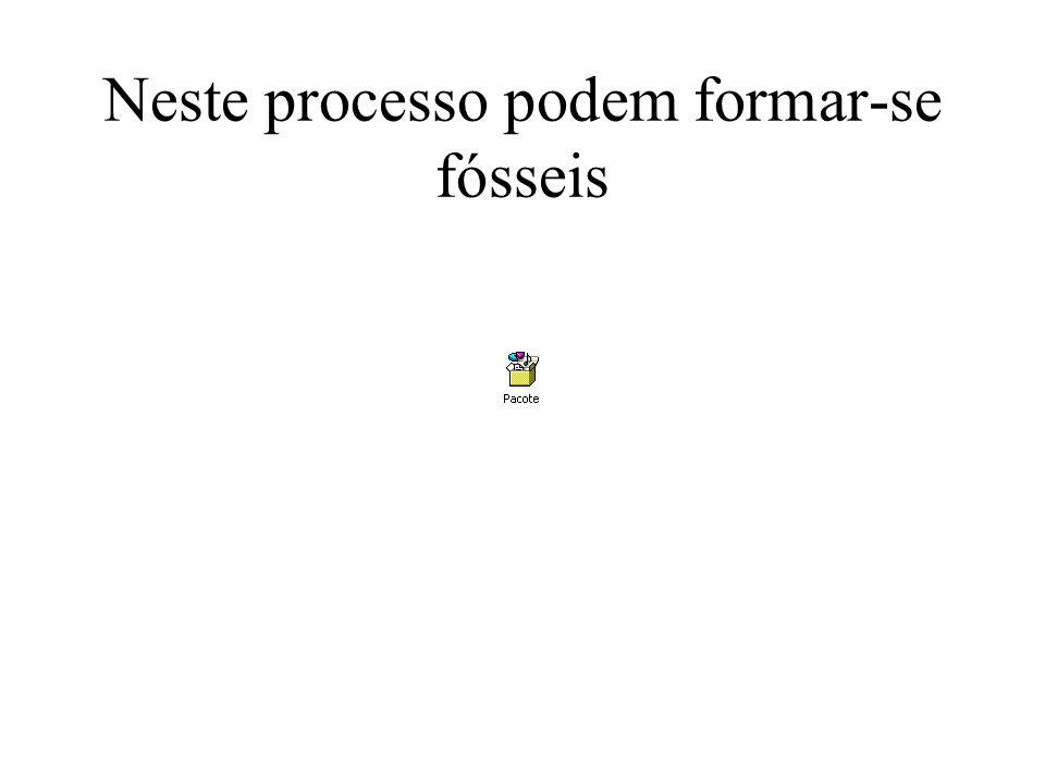 Neste processo podem formar-se fósseis