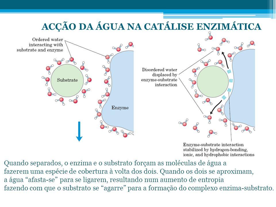 ACÇÃO DA ÁGUA NA CATÁLISE ENZIMÁTICA Quando separados, o enzima e o substrato forçam as moléculas de água a fazerem uma espécie de cobertura à volta d