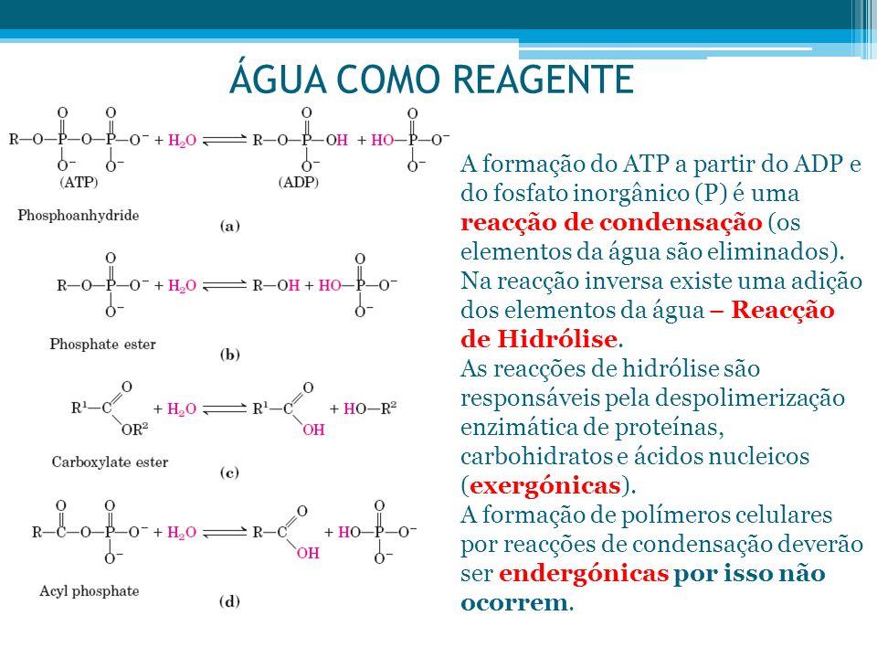ÁGUA COMO REAGENTE A formação do ATP a partir do ADP e do fosfato inorgânico (P) é uma reacção de condensação (os elementos da água são eliminados). N