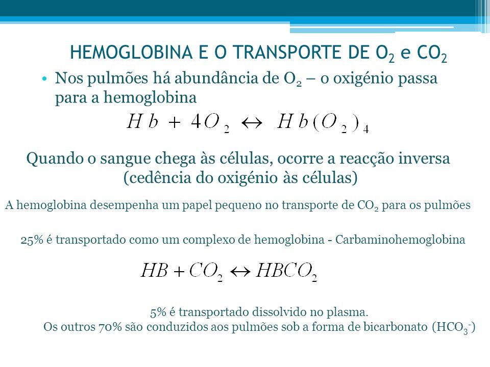 HEMOGLOBINA E O TRANSPORTE DE O 2 e CO 2 Nos pulmões há abundância de O 2 – o oxigénio passa para a hemoglobina Quando o sangue chega às células, ocor