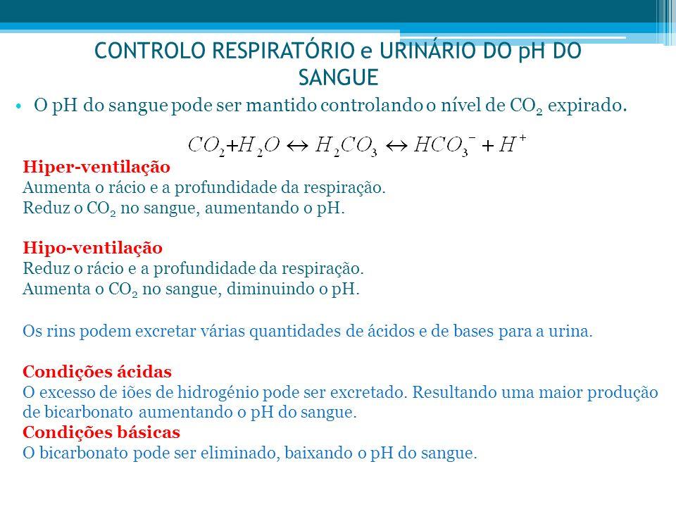 CONTROLO RESPIRATÓRIO e URINÁRIO DO pH DO SANGUE O pH do sangue pode ser mantido controlando o nível de CO 2 expirado. Hiper-ventilação Aumenta o ráci