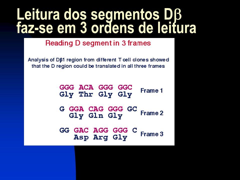 Leitura dos segmentos D faz-se em 3 ordens de leitura