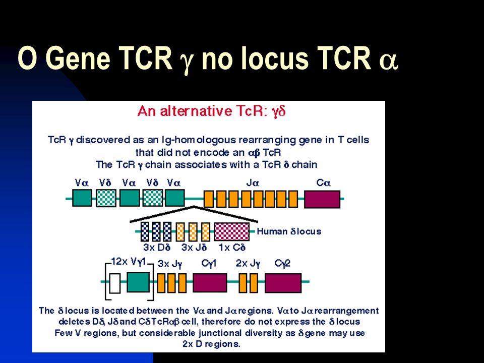 O Gene TCR no locus TCR