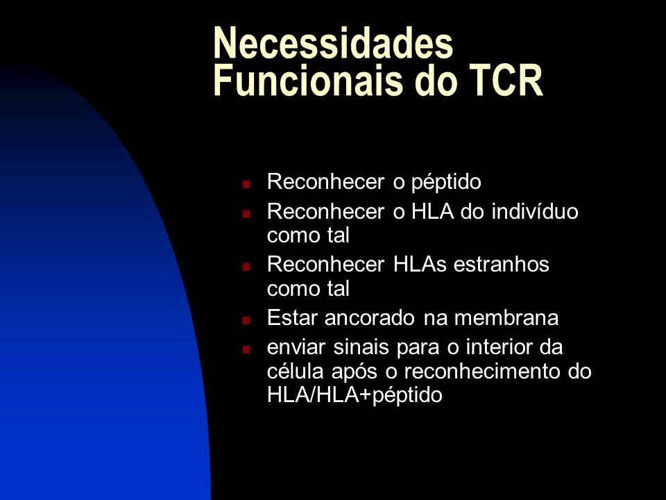 Necessidades Funcionais do TCR Reconhecer o péptido Reconhecer o HLA do indivíduo como tal Reconhecer HLAs estranhos como tal Estar ancorado na membra