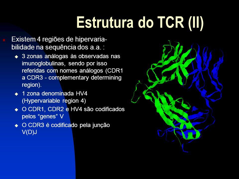 Estrutura do TCR (II) Existem 4 regiões de hipervaria- bilidade na sequência dos a.a. : 3 zonas análogas às observadas nas imunoglobulinas, sendo por