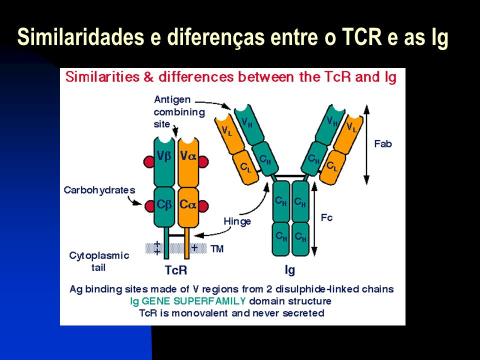 A codificação genética do TCR e Ig NECESSIDADE BIOLÓGICA: Criar um número ilimitado de TCR LIMITAÇÃO PRÁTICA: O Genoma é limitado, pelo que pode codificar um número limitado de Proteínas RESPOSTA BIOLÓGICA: O mecanismo de recombinação somática cria uma diversidade ilimitada a partir de um número limitado de elementos genéticos base