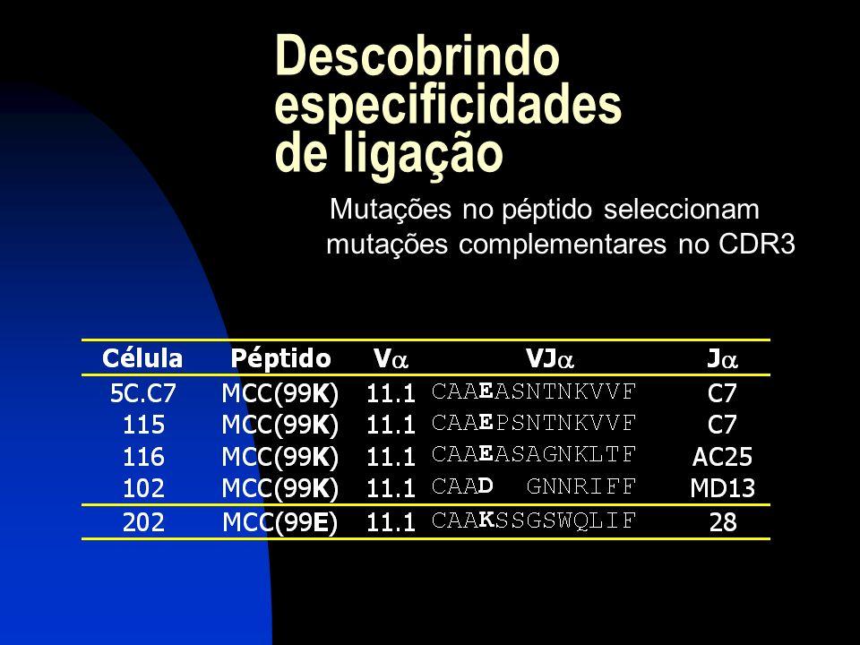 Descobrindo especificidades de ligação Mutações no péptido seleccionam mutações complementares no CDR3