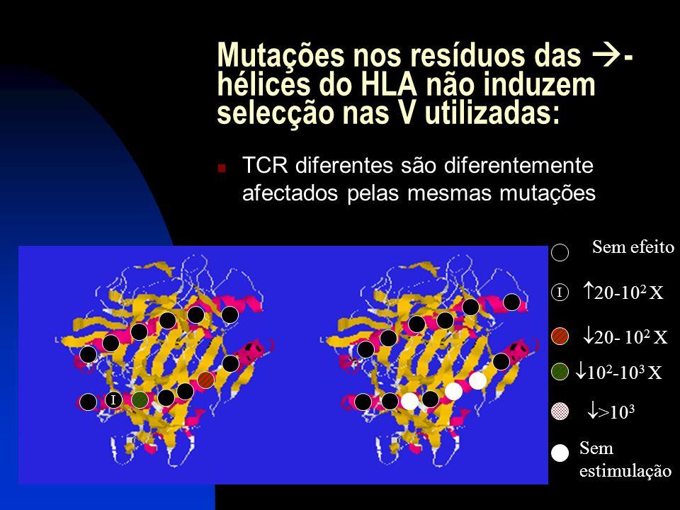 Mutações nos resíduos das - hélices do HLA não induzem selecção nas V utilizadas: TCR diferentes são diferentemente afectados pelas mesmas mutações I