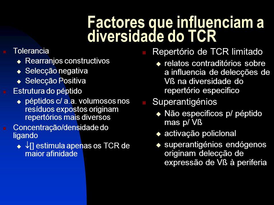 Factores que influenciam a diversidade do TCR Tolerancia Rearranjos constructivos Selecção negativa Selecção Positiva Estrutura do péptido péptidos c/