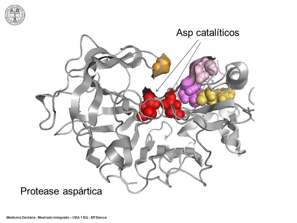 DEPARTAMENTO DE CIÊNCIAS DA SAÚDE Medicina Dentária - Mestrado Integrado – UBA 1 BQ - MTBarros Asp catalíticos Protease aspártica