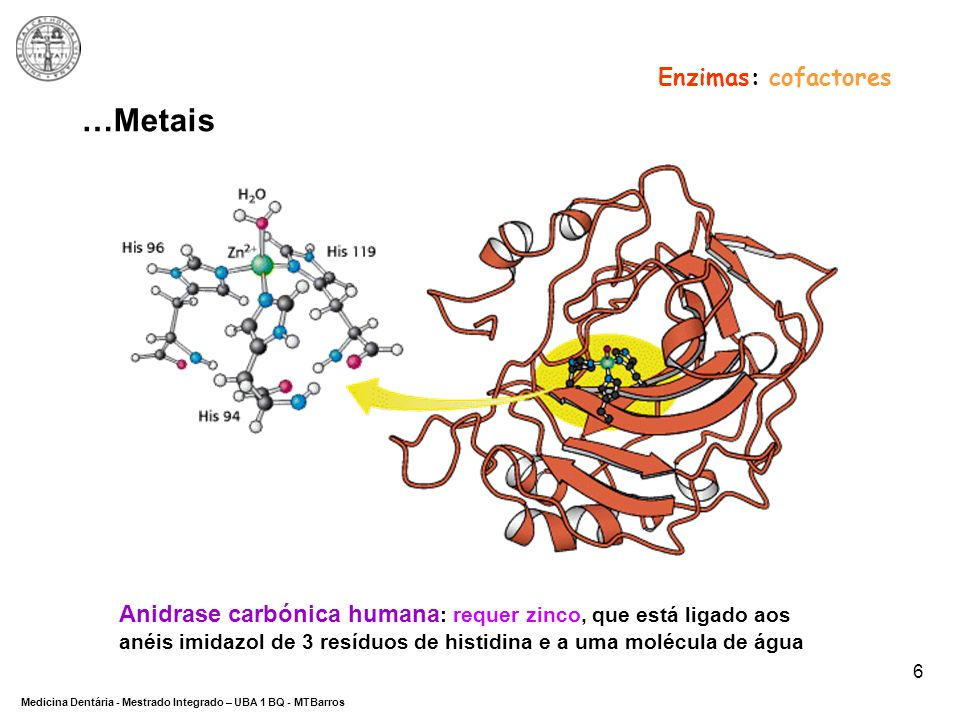 DEPARTAMENTO DE CIÊNCIAS DA SAÚDE Medicina Dentária - Mestrado Integrado – UBA 1 BQ - MTBarros 6 …Metais Anidrase carbónica humana : requer zinco, que