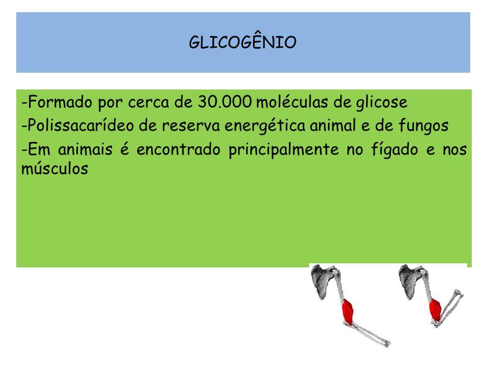 GLICOGÊNIO -Formado por cerca de 30.000 moléculas de glicose -Polissacarídeo de reserva energética animal e de fungos -Em animais é encontrado princip