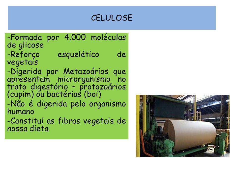 CELULOSE -Formada por 4.000 moléculas de glicose -Reforço esquelético de vegetais -Digerida por Metazoários que apresentam microrganismo no trato dige