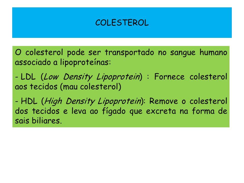 COLESTEROL O colesterol pode ser transportado no sangue humano associado a lipoproteínas: - LDL (Low Density Lipoprotein) : Fornece colesterol aos tec