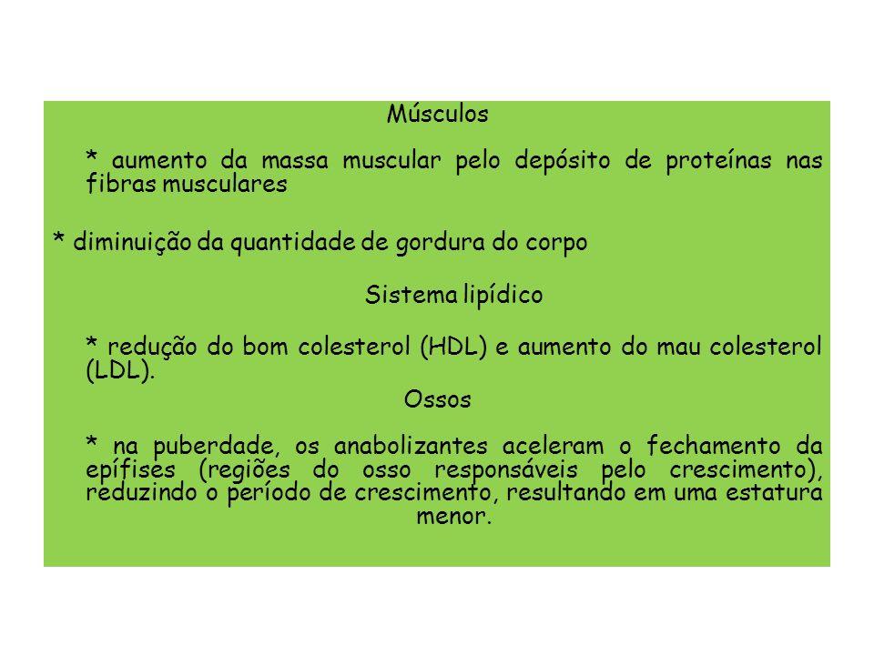 Músculos * aumento da massa muscular pelo depósito de proteínas nas fibras musculares * diminuição da quantidade de gordura do corpo Sistema lipídico