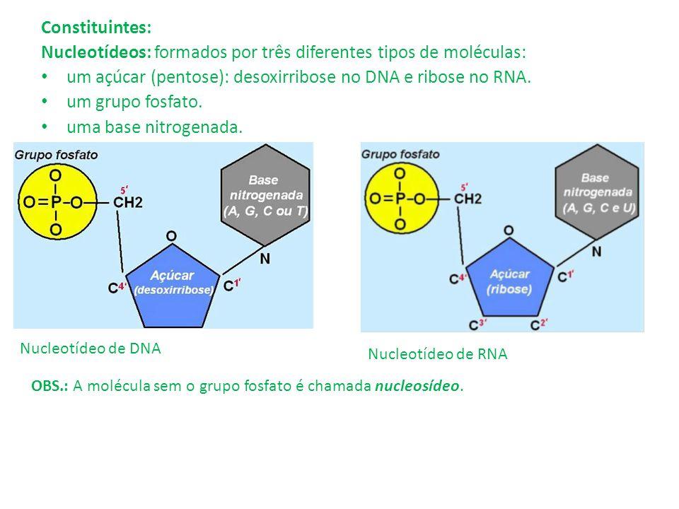 Constituintes: Nucleotídeos: formados por três diferentes tipos de moléculas: um açúcar (pentose): desoxirribose no DNA e ribose no RNA. um grupo fosf