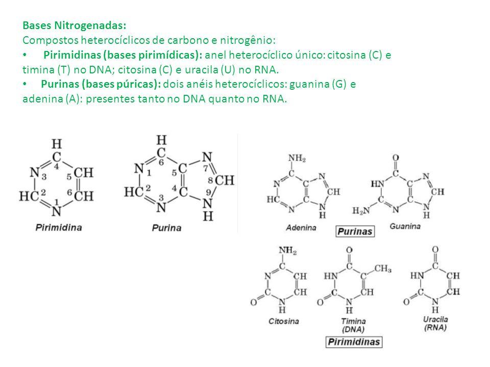 Bases Nitrogenadas: Compostos heterocíclicos de carbono e nitrogênio: Pirimidinas (bases pirimídicas): anel heterocíclico único: citosina (C) e timina