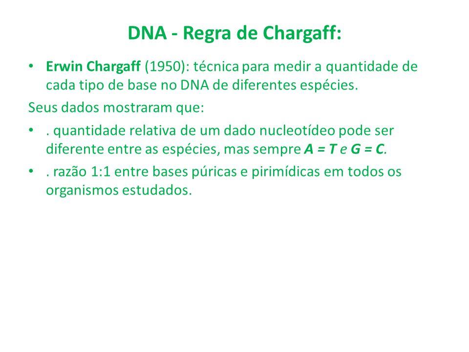 DNA - Regra de Chargaff: Erwin Chargaff (1950): técnica para medir a quantidade de cada tipo de base no DNA de diferentes espécies. Seus dados mostrar