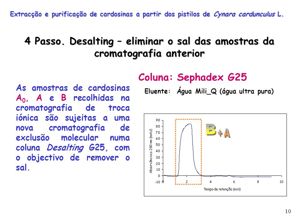 10 As amostras de cardosinas A 0, A e B recolhidas na cromatografia de troca iónica são sujeitas a uma nova cromatografia de exclusão molecular numa c