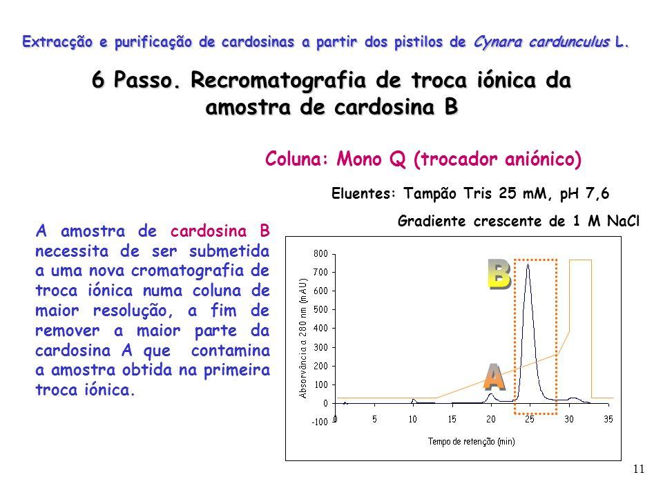 11 Coluna: Mono Q (trocador aniónico) Eluentes: Tampão Tris 25 mM, pH 7,6 Gradiente crescente de 1 M NaCl Extracção e purificação de cardosinas a part
